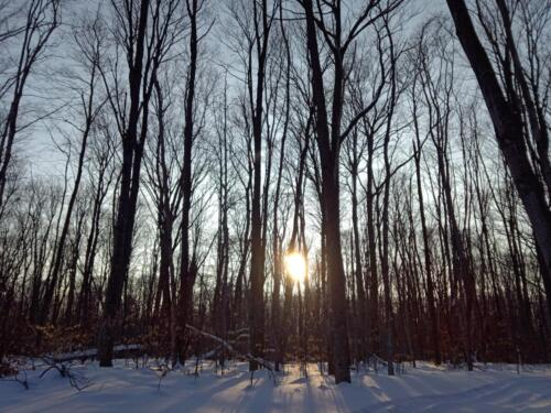 Winter woods on our island home.  We don't get to see much of that bright object during build season.